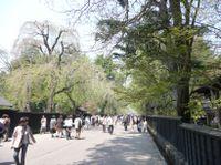 Kakunodate20081