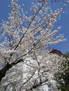 Tsuruoka1